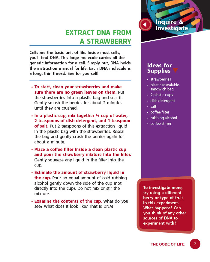 Extract DNA from a Strawberry