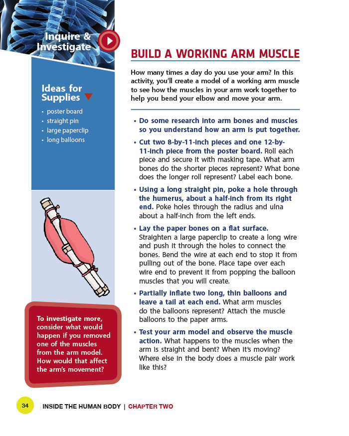 Build a Working Arm Muscle