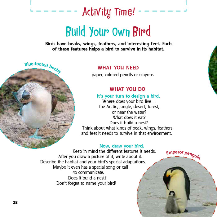Build Your Own Bird