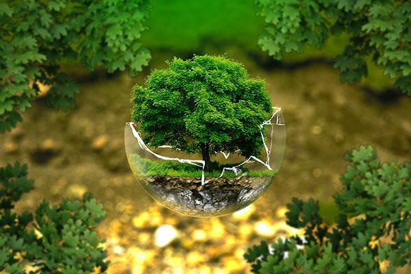 tree in a broken glass bowl